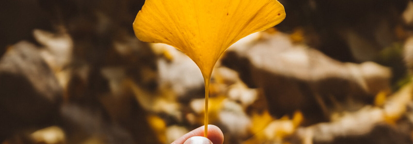Hand holding a yellow leaf